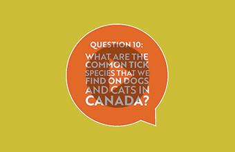 Question 10: What are the common tick species that we find on dogs and cats in Canada? (video)
