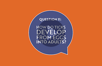 Question 11: How do ticks develop from eggs into adults? (video)