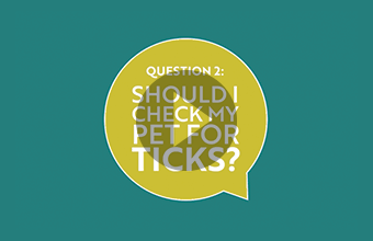 Question 2: Should I check my pet for ticks? (video)