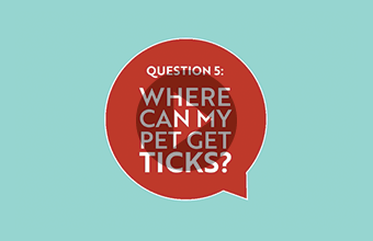 Question 5: Where can my pet get ticks? (video)