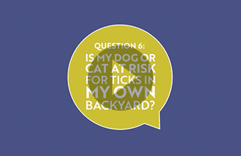 Question 6: Is my dog or cat at risk for ticks in my own backyard? (video)