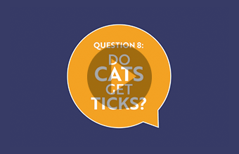 Question 8: Do cats get ticks? (video)