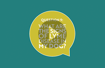 Question 9: What are the signs of Lyme disease in my dog? (video)