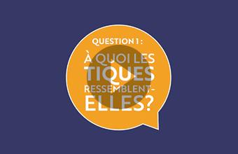 Question 1 : À quoi les tiques ressemblent-elles? (vidéo)